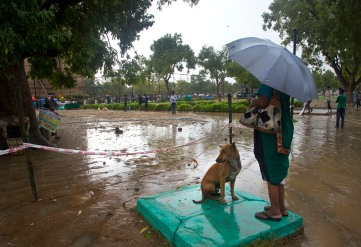 A stray dog joins an elderly woman who stands on a drain cover to avoid slipping in puddles caused by the day's rainfall near the India Gate monument, background left, in New Delhi, India, Monday, Aug. 7, 2017. India gets its monsoon rains from June to September. (AP Photo/Vaishnavee Sharma)